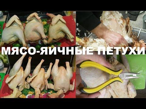 Вопрос: Какая порода кур мясной наседки является самая лучшая на данный момент?