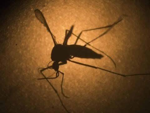 Texas Reports its First Zika-Related Death
