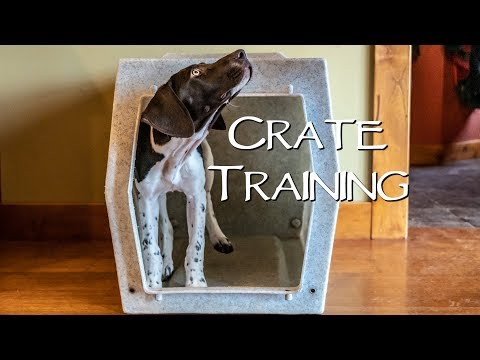 How To Crate Train Your New Puppy  Step 2