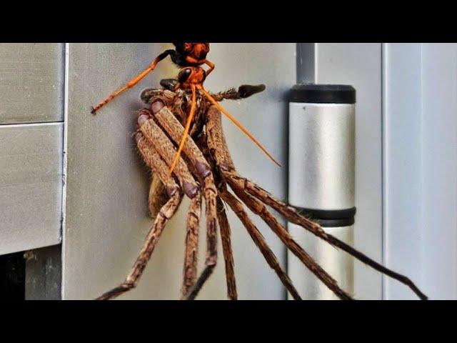 10 Arañas más Espantosas que no Querrás Encontrarte