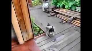 Собака спасает кота от смерти!