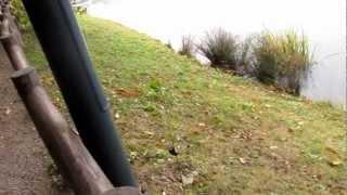 新海池公園 南側 ヘラブナ ブラックバス 釣り ポイント