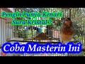 Masteran Kenari Suara Kristal Masteran Kenari Suara Jernih Kenari Gacor Buat Masteran  Mp3 - Mp4 Download