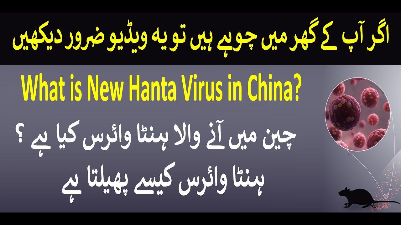 What is Hanta Virus in Hindi, New HantaVirus China, History of ...