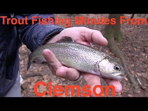 Trout Fishing Minutes From Clemson