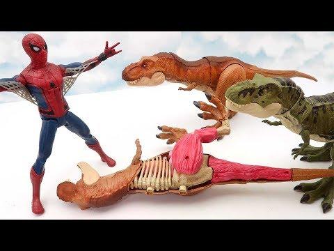 Tyrannosaurus Rex Dinosaur VS Spider-Man! Dinosaur Anatomy Fun Video For Kids 화난 스파이더맨