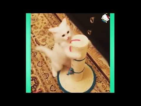Cat Videos Compilation 2016 –  Cute Cat Videos || Funny Vines