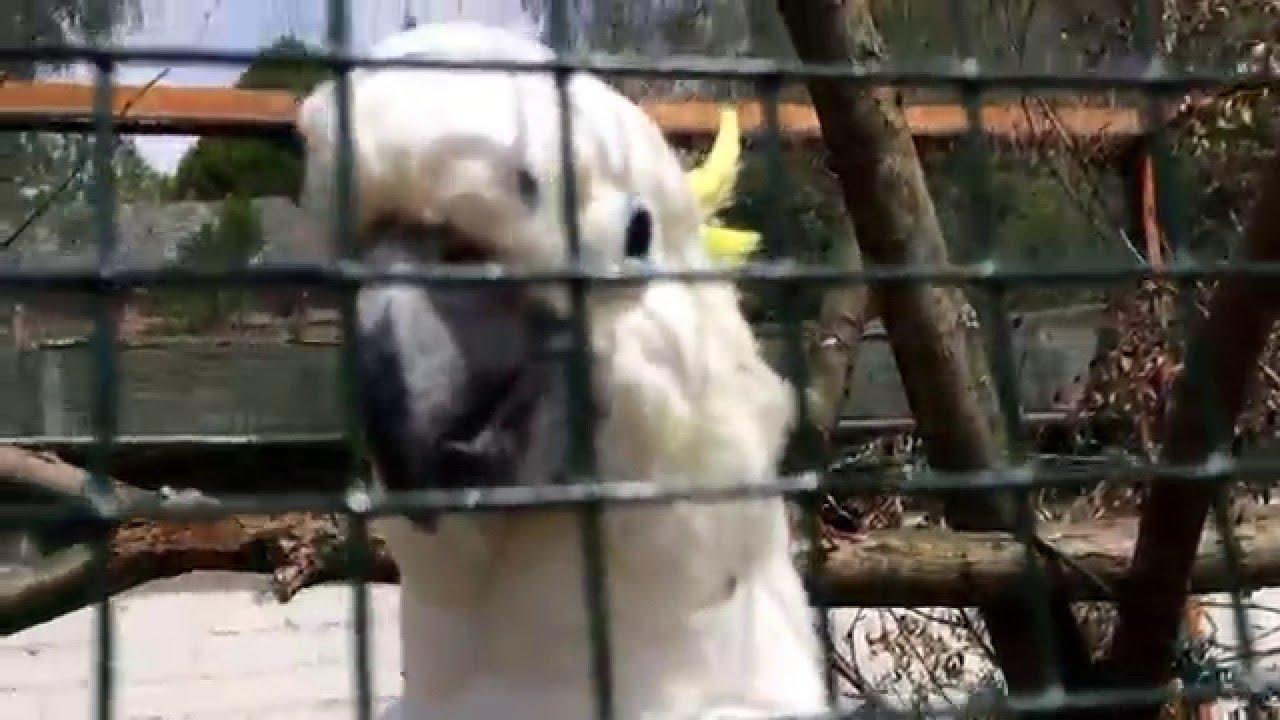 vogelpark weilrod