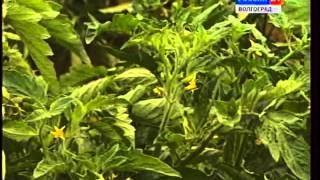 видео Болезни растений (часть 2)