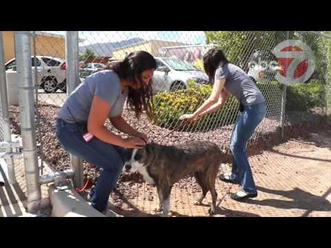 Humane Society of El Paso Second Chances 30 082616 WM