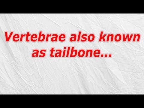 Vertebrae also known as tailbone (CodyCross Crossword Answer)