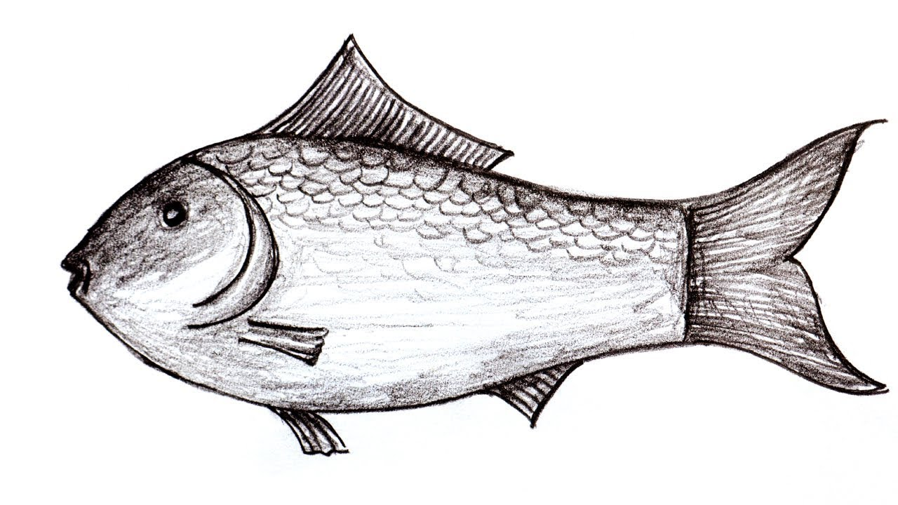 Wood pencil artart a fish easily3d art on paper by hand for who loves drawing