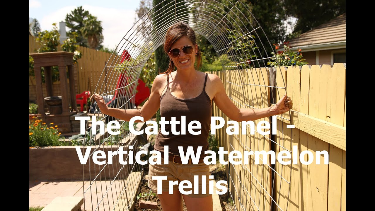 How to Make A Watermelon Garden Arch Trellis from a Cattle Panel ...