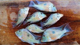 catch-n-cook-aquarium-fish