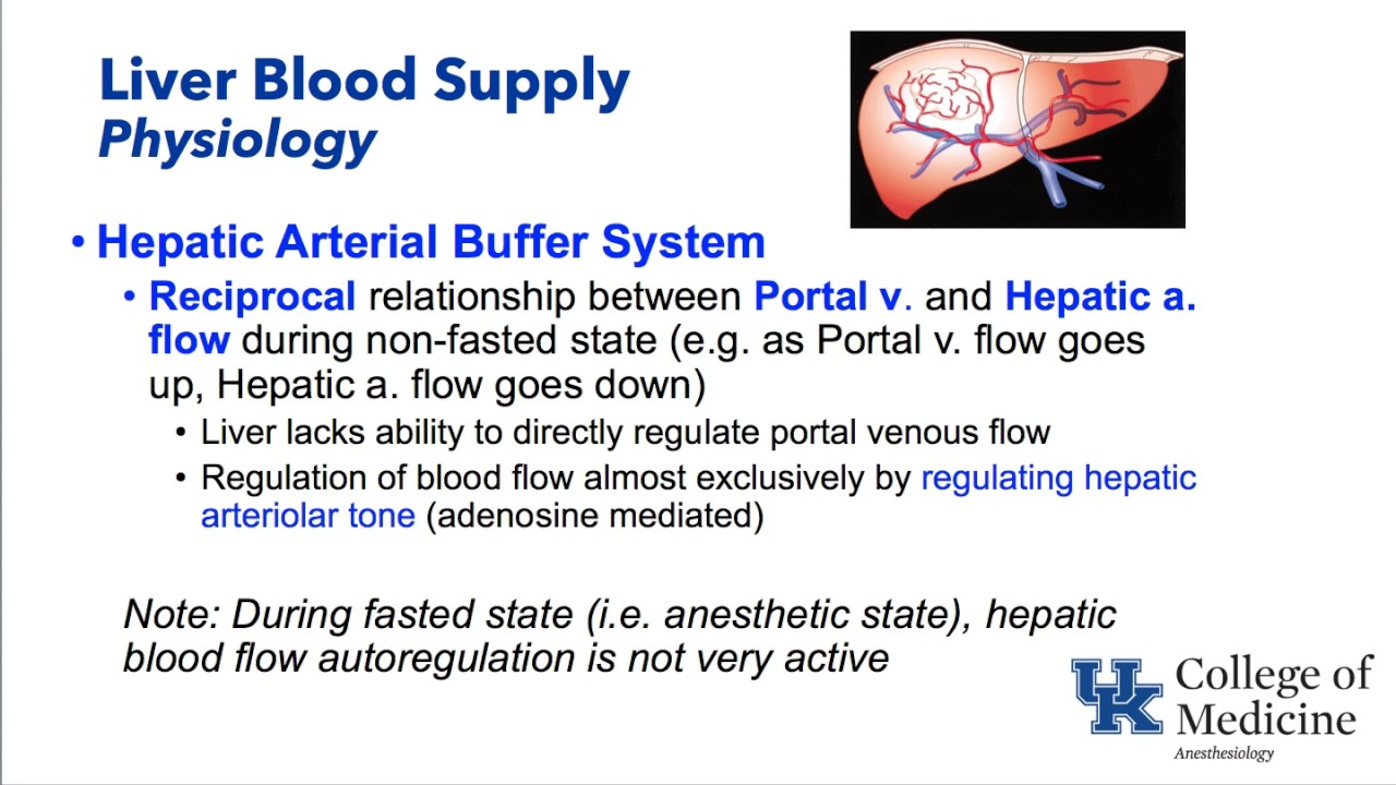 Hepatic Physiology And Anesthesia Dr Schell Youtube