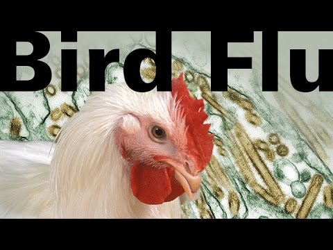 How to Survive a Bird Flu Pandemic with your best planning anti-viral medications and Exercise