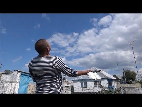 "Голуби у Василия,   20.07.19г. тот же ""ветерок"""