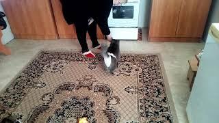 Кот в трусах