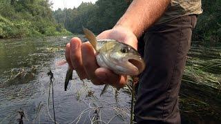 Нахлыст для начинающих, ловля голавля, рыбалка на реке