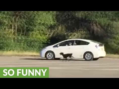 How to exercise your dogs using a car