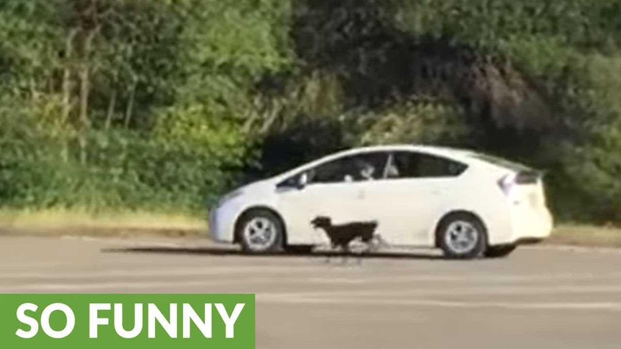 how-to-exercise-your-dogs-using-a-car