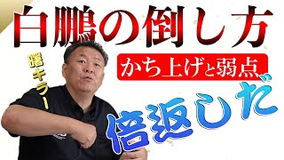 【倍返し】横綱・白鵬の倒し方 弱点暴露  大鵬・貴乃花 相撲界最強は?