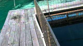 Pulau Putri.MOV