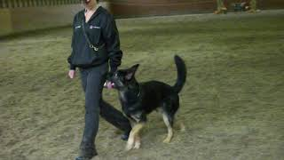 Natasha & Maximus Obedience
