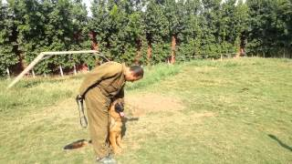 Dog Training In Egypt At Ar.kennel 01064288247