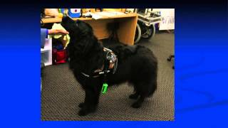 Can Wearable Computing for Dogs Keep Humans Safer? | Melody Moore Jackson | TEDxPeachtree
