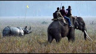 Inside Kaziranga: counting one-horned rhinos
