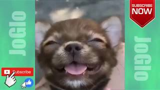 FUNNY and Cute ANIMALS Video Compilation #6 The FUNNIEST ANIMAL VIDEOS 2018