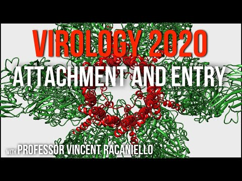 Virology Lectures 2020 #5: Attachment and Entry