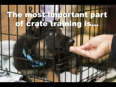 Crate Training A Puppy Schedule. What Rules Apply? When To Let Your Puppy Out Of The Crate