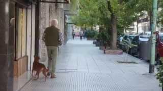 El hombre y el Perro - Donación de órganos - BFVW thumbnail