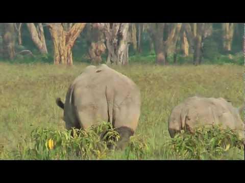 Camp Olkonoi: More rhinos in Lake Nakuru Game Park