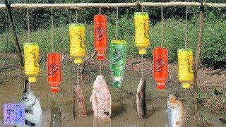 Câu Cá Bằng Chai Nhựa Tuy Đơn Giản Và Dính Toàn Cá Khủng .Fishing Trap With 8 Bottles