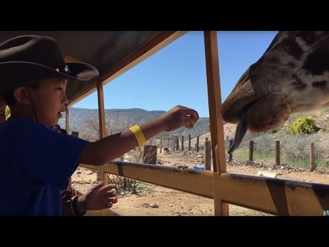 Out of Africa Wild Life Park, Camp Verde Arizona (bonus footage)