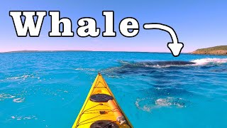 Kayaking with dolphins | Mini Series Ep4