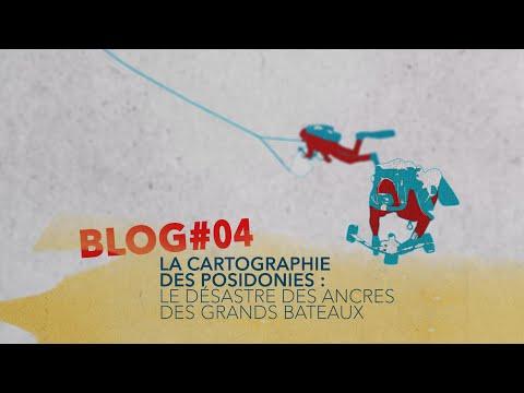 Blog #4 : La cartographie des posidonies : Le désastre des ancres des grands bateaux