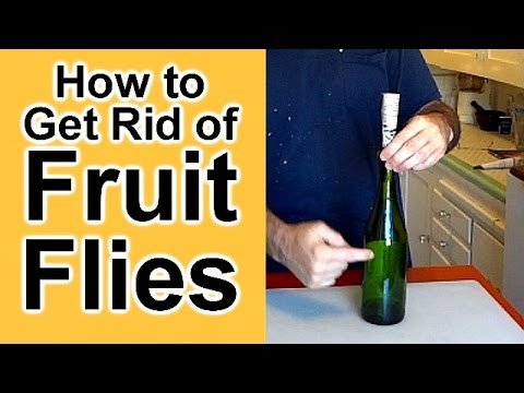 How To Get Rid Of Fruit Flies Youtube