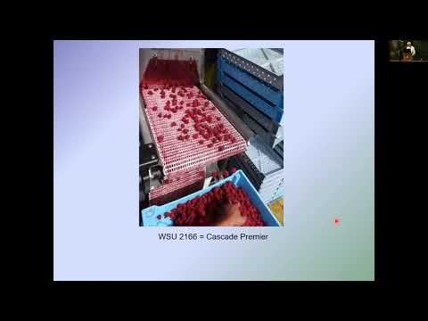 Development of New Raspberry Cultivars for the Pacific Northwest Pat Moore
