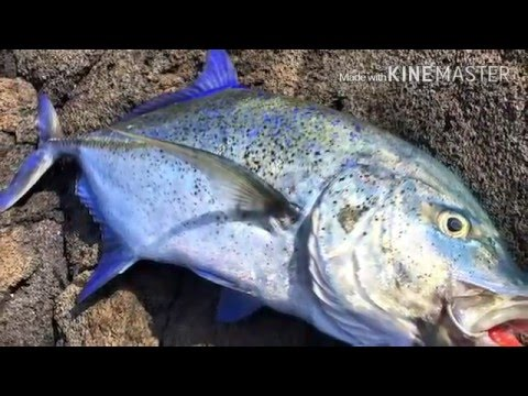 Big island ulua fishing trip. Nov 12-15.