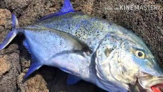 big island ulua fishing trip nov 12 15