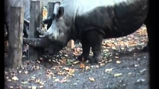 Repeat youtube video LondonZoo1960'smp4
