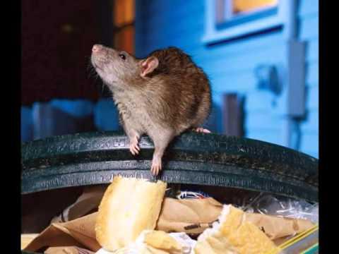 Fe de Ratas. La Ratuka y el Miedo.