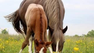 les  chevaux l'experience de la liberté 2015