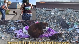 Homeless Pit Bull sits by her dead friend for two weeks...