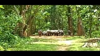 Panchalingeswar, Nilgiri, Chandipur, Kuldiha Forest, Devkund  in Orissa. - Part 22