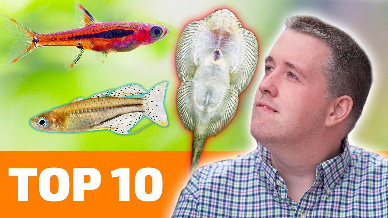Top 10 Nano Fish for Freshwater Aquariums